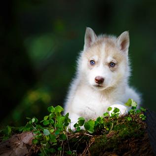 สัตว์/ธรรมชาติ