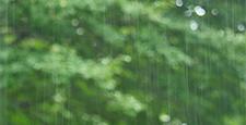 新緑 雨 背景ぼけ
