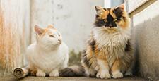 猫 猫咪 小猫