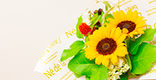 sunflower, sunflowers, globe amaranth