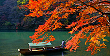 maple, yellow leafe, kyoto
