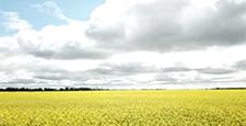 オーストオーストラリア Auラリア Australia 大自然 菜の花畑 ドローン 空撮 DRONE