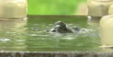 Temizuya spring water
