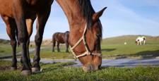草原で草を食べる馬