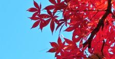 東京都大田区宝来公園の紅葉
