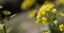 强奸开花背景材料黄色三月三菱