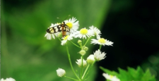 Insects and white flowers