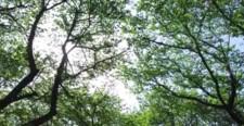 木の隙間から差し込む光