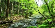 新緑 渓流 森林