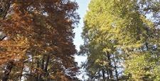 東京都新宿区にある公園の秋の景色